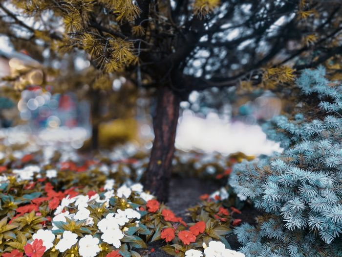 street Bokeh Tree Multi Colored Pinaceae Autumn Forest Cold Temperature Full Frame Growing