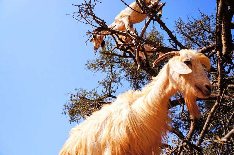 Low angle view of a horse on tree