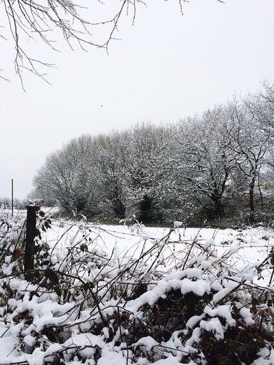 Snowy scene Snow Tree Countryside Love White Wonderland Gorgeous Thick