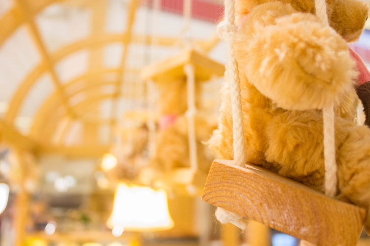 On the Road Animal Animal Representation Animal Themes Brown Close-up Day Domestic Domestic Animals Focus On Foreground Indoors  Mammal No People One Animal Pets Relaxation Small Softness Stuffed Toy Teddy Bear Toy