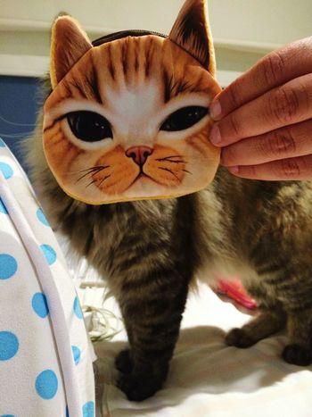 Jaja... Es guapa!!! Cats Cat Lovers Ojazos Adoptanocompres Peluda Hermosa