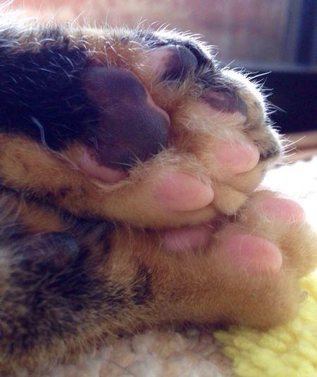 Cat Lovers 肉球 First Eyeem Photo Pet Photography
