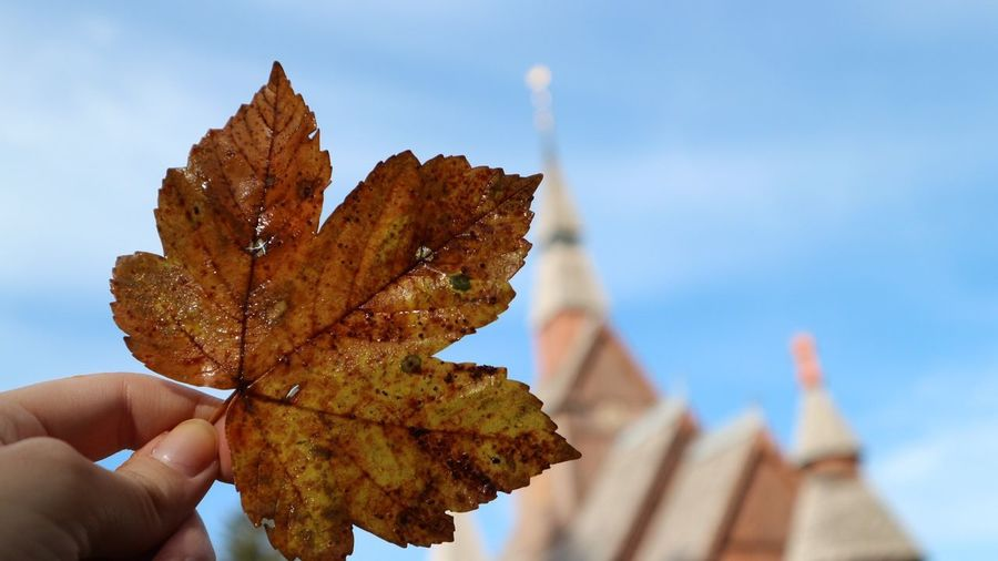 Church Church Hand Holding Nature Close-up Leaf Focus On Foreground Autumn Outdoors Human Finger Day Sky One Person Plant Finger Human Body Part EyeEmNewHere Autumn Mood