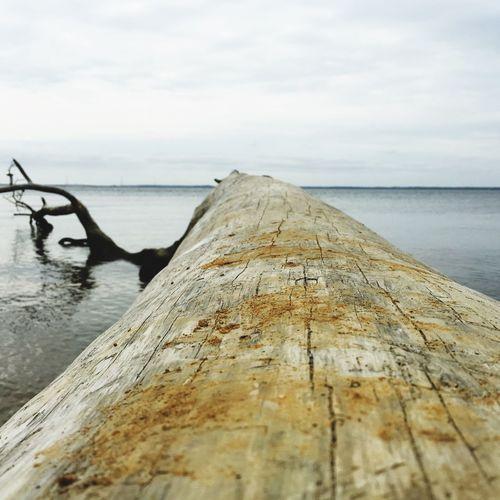 Log Nature Photography Water Ocean Nature Photography Virginia Newportnews