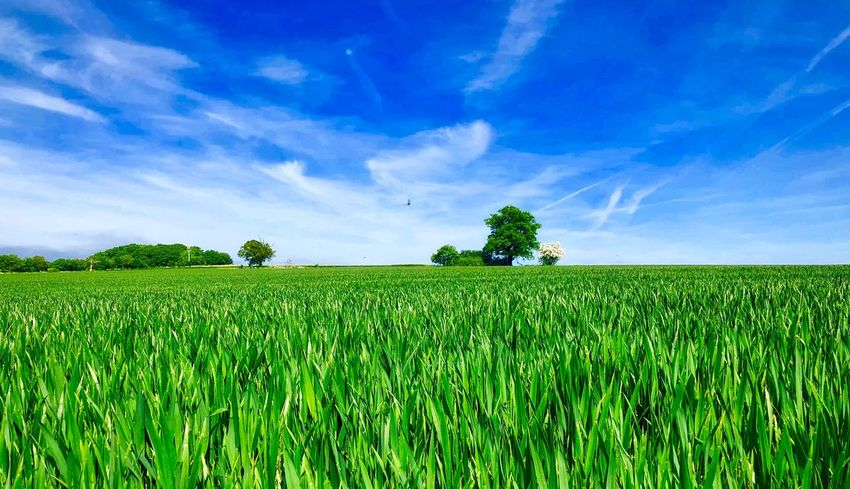 Plant Field Sky Growth Green Color Beauty In Nature Landscape Cloud - Sky Tranquility Scenics - Nature Land Tranquil Scene Environment Rural Scene Farm Nature Agriculture No People Crop  Day