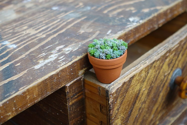 Potted Plant On Drawer