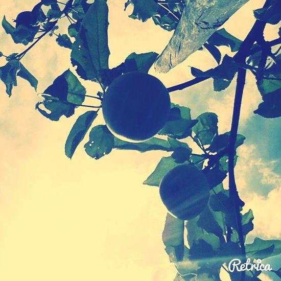 Flower Life<3 Smile