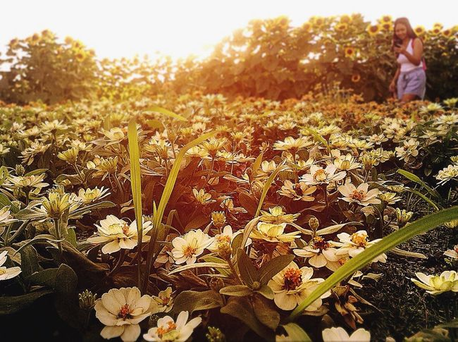 EyeemPhilippines Mobilephotography Eyeem Philippiness EyeemPhilippines Agriculture Rural Scene Field Nature Beauty In Nature Flower Growth Outdoors Freshness Plant Sunset Landscape Adult Day Only Women Adults Only Flower Head One Person People Sky The Great Outdoors - 2017 EyeEm Awards The Week Of Eyeem