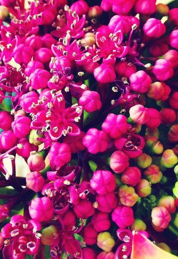Flowers Everywhere EyeEm Flower Flower_Collection Loving Flowers