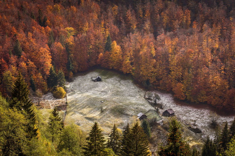High angle view of forest during autumn