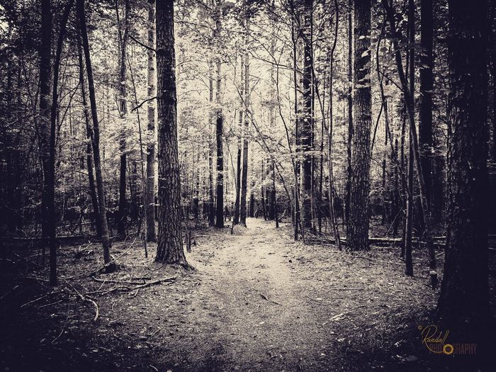 White Path to Forest EyeEmNewHere Landscape Nature Outdoor Old Trees Path Pathway Mystery Dark Forest Stone Mountain State Park Park Outdoors Backgrounds Pattern Textured  Day No People EyeEmNewHere