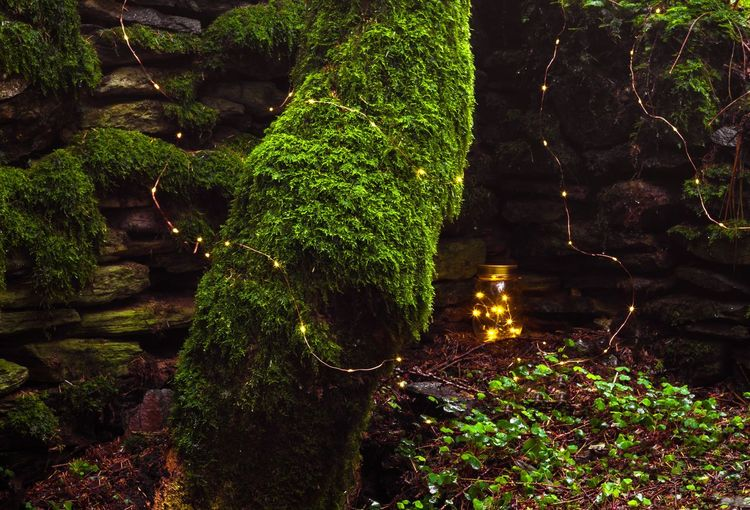 Stones Forest Lights Plant Green Color No People Nature Tree Growth Illuminated Outdoors High Angle View Reflection Beauty In Nature