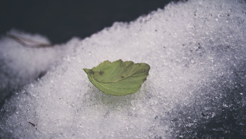 Close-up Curiosity Detail EyeEm Best Shots EyeEm Nature Lover Freshness Full Frame Green Green Color Growth High Angle View Home Leaf Leaf Vein Natural Pattern Nature No People On The Snow Plant Relaxing Showcase: December Snow Softness Wet Zoology