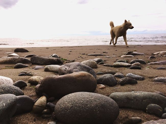 Hybrid Dogs Of EyeEm Working Dog Beachphotography Pacific Northwest  Great Outdoors Relaxing Moments