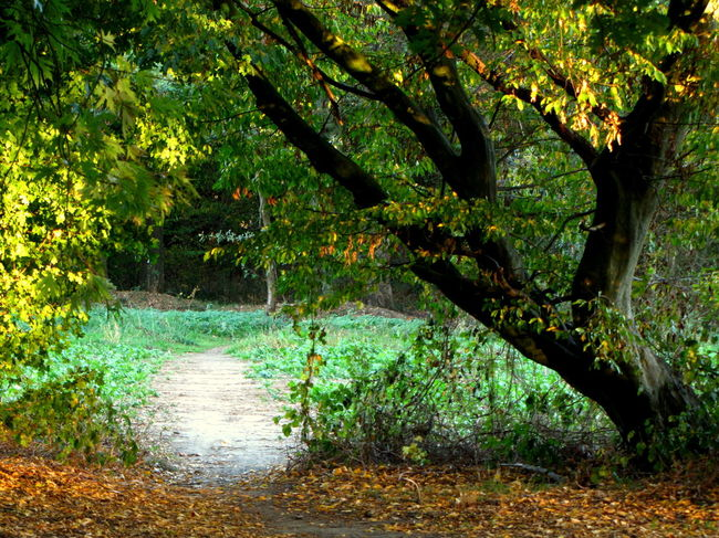 Autumn Beauty In Nature Branch Change Day Direction Forest Growth Land Leaf Nature No People Outdoors Park Plant Plant Part Scenics - Nature Tranquil Scene Tranquility Tree Water