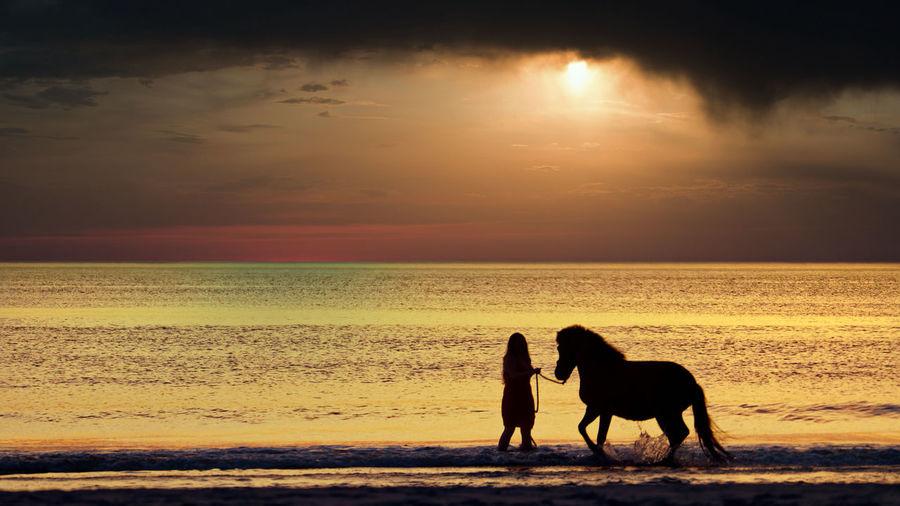 Silhouette horse on beach against sunset sky