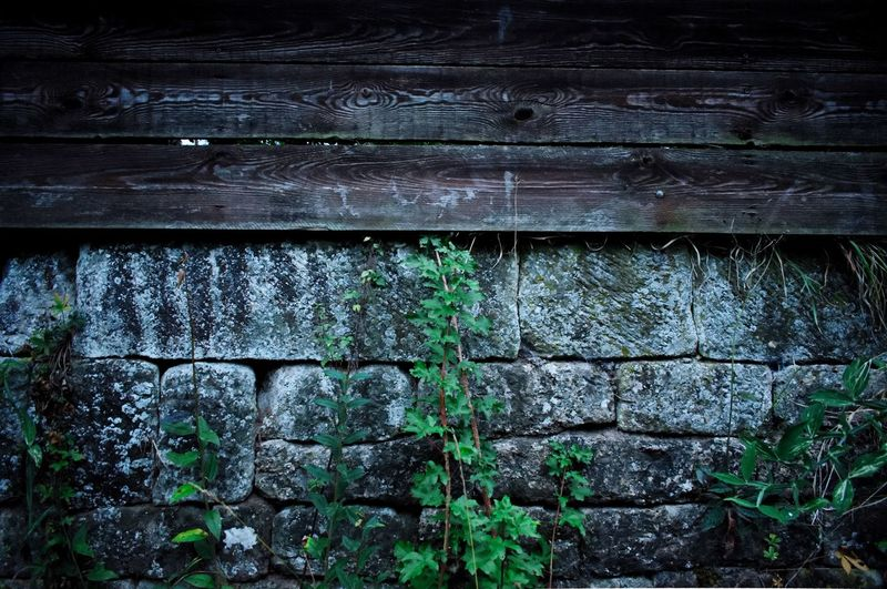 Wood - Material No People Full Frame Day Architecture Weathered Built Structure Close-up Nature Outdoors Green Color Backgrounds Plant Old Damaged Abandoned Run-down Pattern Wall - Building Feature Textured
