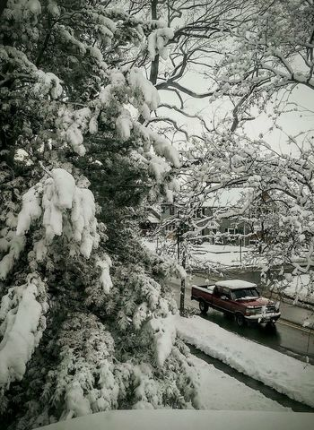 Spring Snow Storm Colorado Photography Snow Day View From The Window... Pine Trees Beautiful Nature EyeEm Gallery Red Truck After The Storm Here Belongs To Me