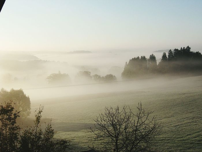 Scenic View Of Trees Growing On Grassy Field During Foggy Weather