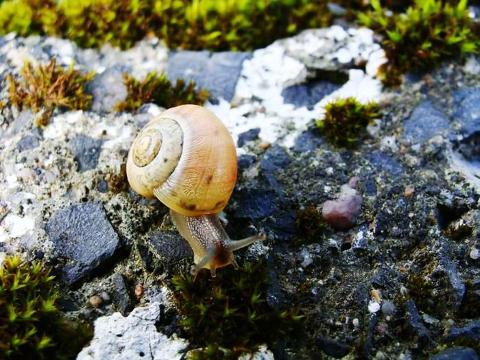Mr Snail Taking Photos Nature Makes Me Smile Snail Nature