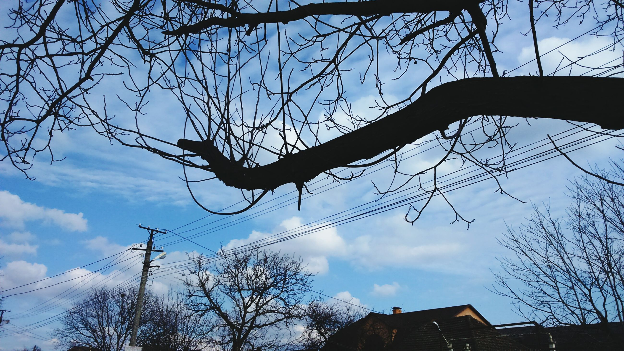 low angle view, bare tree, branch, sky, tree, silhouette, built structure, building exterior, architecture, cloud - sky, cloud, nature, tree trunk, outdoors, no people, high section, sunset, day, house, power line