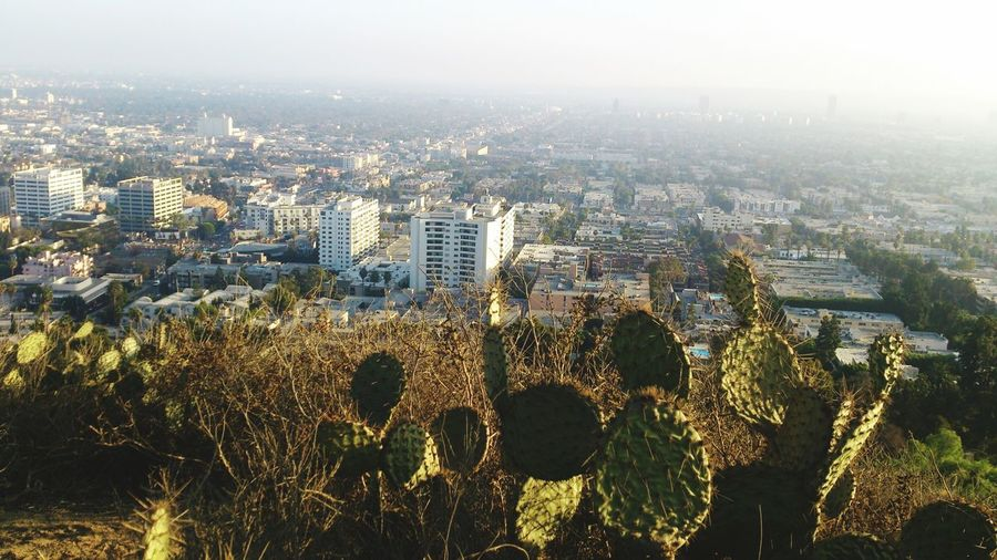 High Angle View Of Cacti Growing On Hill Against Cityscape