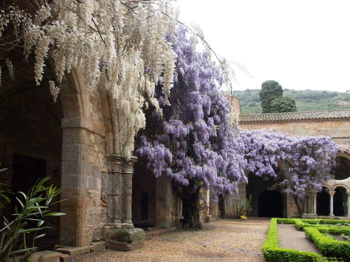 Claustro Abadía Fontfroide Flores Architecture France 🇫🇷