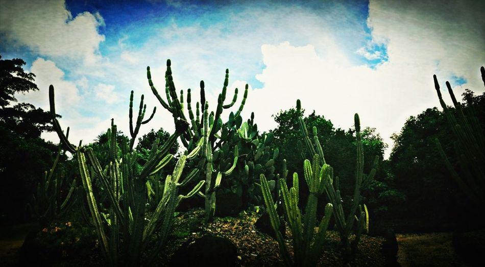 Nature Cactus Green Plants