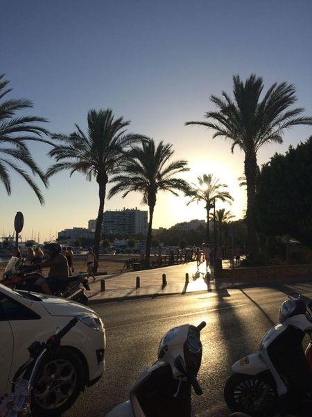 Holiday Photography Photooftheday Ibiza Beach Ibiza Spaın Sunny Sunset Palm Tree Tree Silhouette Transportation People Adult Beach Outdoors Sunset Sky