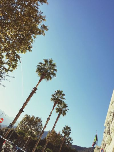 🌴 Tree Palm Tree Growth Low Angle View No People Nature Built Structure Sky Clear Sky Outdoors Architecture Day