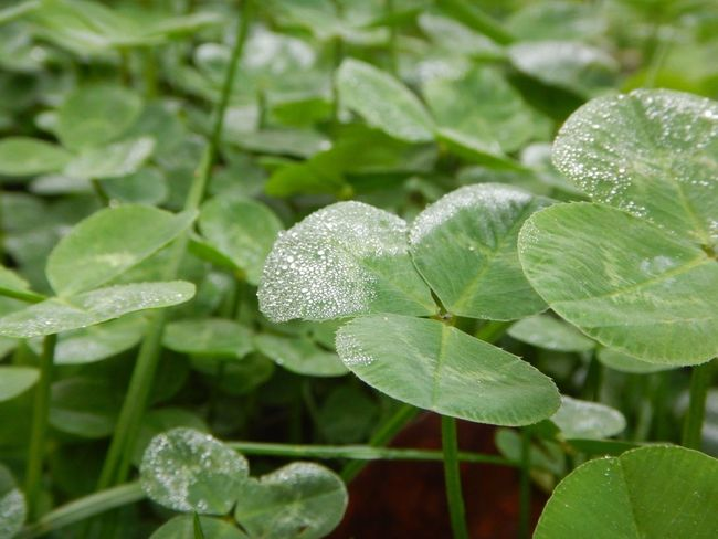 Close-up Freshness Green Green Color Growth Leaf Leaves Nature Plant Water