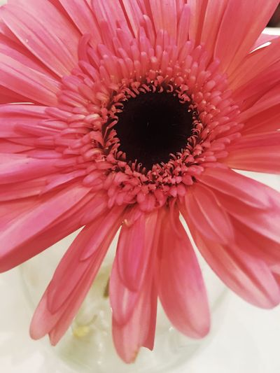 """where flowers bloom so does hope"" Flower Flowering Plant Petal Vulnerability  Beauty In Nature Inflorescence Freshness"