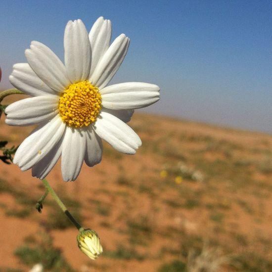 جمالها_ببساطتها المصورين العرب قروب المصورين العرب تصويري