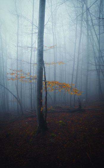 Foggy forest EyeEm Best Shots - Nature EyeEm EyeEm Gallery EyeEm Nature Lover Eyeem Market EyeEm Best Shots Fog Tree Plant Nature No People Tree Trunk Tranquility Land Beauty In Nature Day Outdoors Forest Branch Bare Tree Environment Change Growth Winter Cold Temperature Trunk