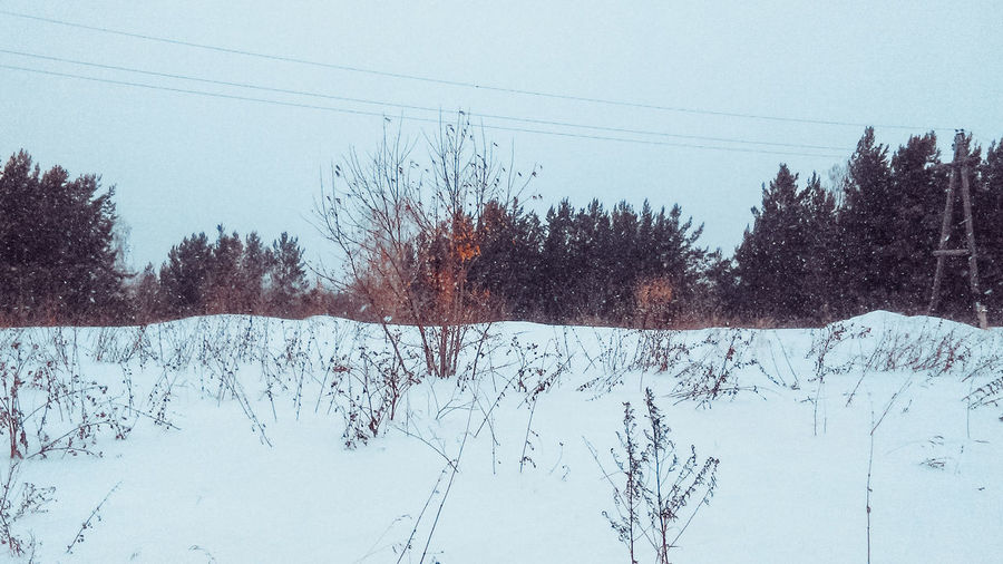 Beauty In Nature Clear Sky Cold Cold Temperature Day Forest Horizon Low Angle View Nature Nature No People Outdoors Scenics Sky Snapseed Snow Snow ❄ Tranquility Tree Tree VSCO VSCO Cam Vscocam Vscogood Winter