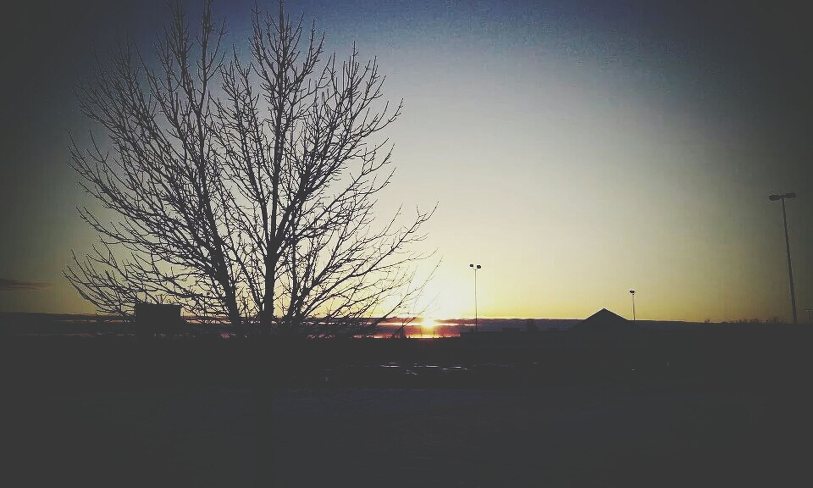 silhouette, sunset, bare tree, copy space, tree, clear sky, sun, tranquility, tranquil scene, scenics, nature, sky, beauty in nature, built structure, landscape, branch, architecture, orange color, building exterior, field