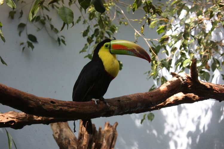Beak Bird Branch National Aviary No People One Animal Tree Tucan