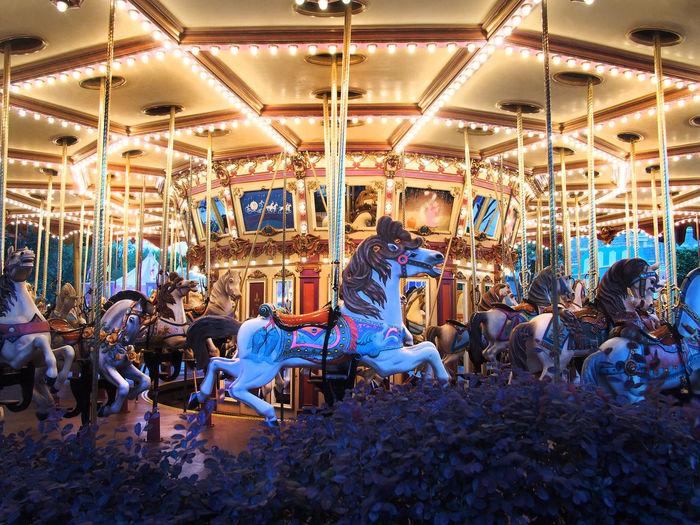 Illuminated carousel horses at amusement park
