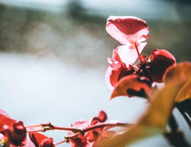 flower Red Autumn colors Jesień Flower Red Autumn🍁🍁🍁 Zoom Moody Vibrant Color Warsaw Saskakepa Hibiscus Single Flower Blossom Botany Focus Plant Life
