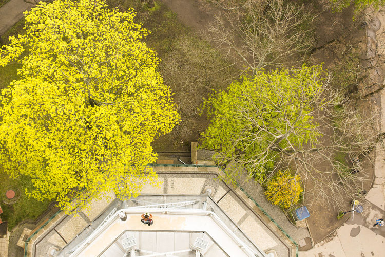 High angle view of yellow flowering plants by wall