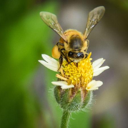 Macro Bee 🐝 Nature