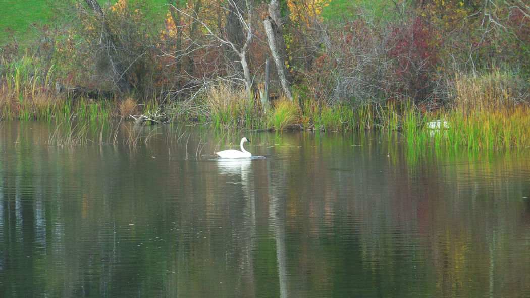 Like A Paint Colors Of Autumn Fall Colors Swan Lake