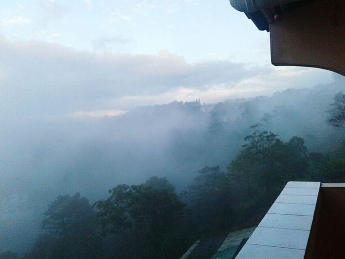 Fog Foggy Foggymorning Treesandfog Cold Coldandfoggy