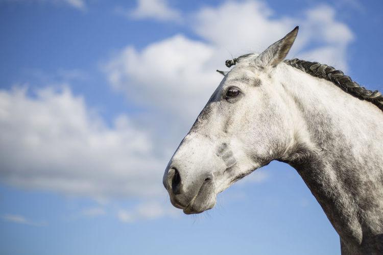 Horse against sky