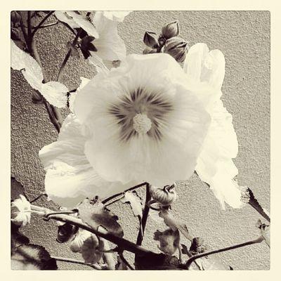Nature Doğa Türkiye Populer Photos Blackandwhite çiçek Flowers Popüler Fotoğraflar Landscape_photography EyeEm Nature Lover