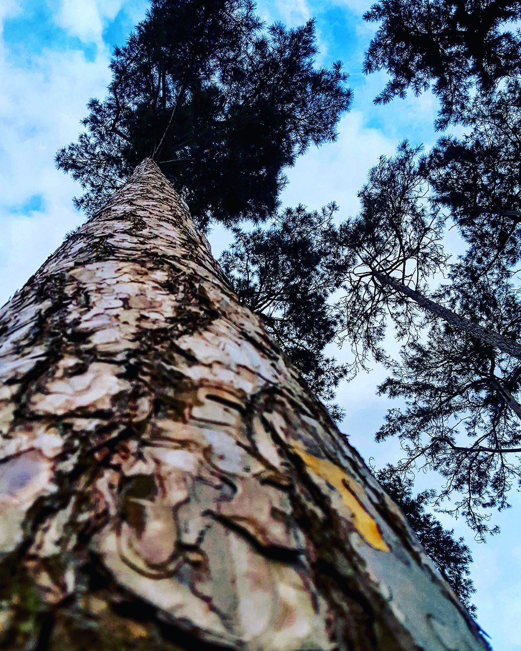 tree, low angle view, tree trunk, sky, day, nature, growth, outdoors, no people, bark, branch, rough, cloud - sky, textured, beauty in nature, built structure, close-up