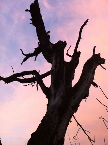 Tree Tree Trunk Branch Low Angle View No People Sky Dead Tree Outdoors Nature Silhouette Bare Tree Day Sunset Beauty In Nature Close-up