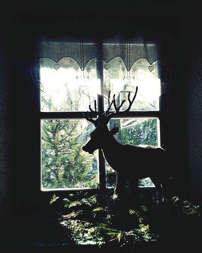 Deer Christmas2015 Pizzoccheri Della Valtellina Crotasc Mese Lunch