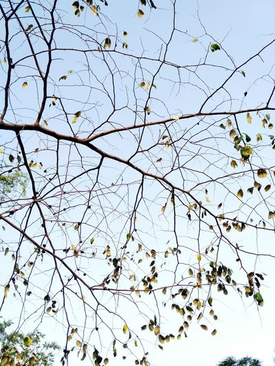Tree Patterns In Nature Branches And Sky Branches Leaves Nature Nature Photography Naturelovers Dawn Pleasant Yellow Brown Art Dry Leaves No People Noflowers Close-up Ink Backgrounds Pattern Abstract Textured  Sky