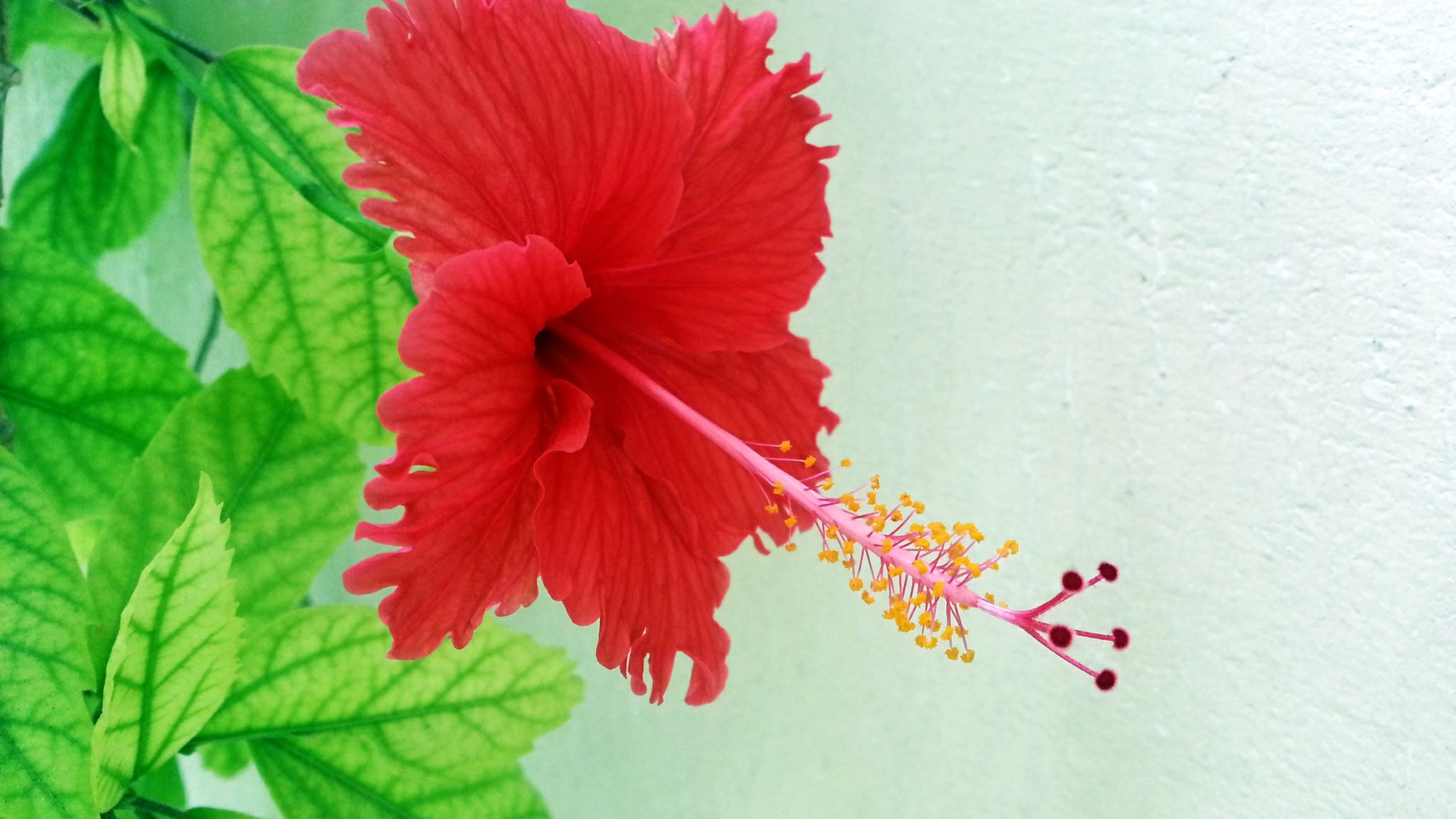 flower, petal, freshness, flower head, fragility, growth, red, leaf, beauty in nature, plant, nature, close-up, blooming, in bloom, orange color, single flower, blossom, botany, stem, no people